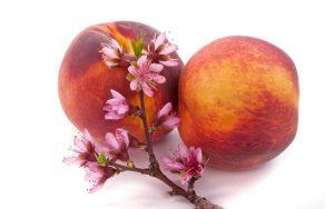 peach-blossom-BG