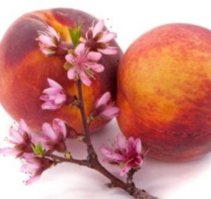 peach-blossom-Thumb