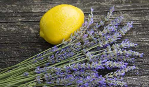 lavender lemon 2
