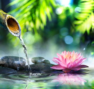 Waterlily & Bamboo